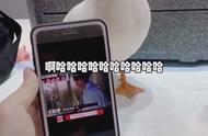给鸭子听罗志祥的笑声,哈哈哈哈,笑死了