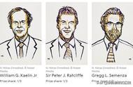 2019年诺贝尔生理学或医学奖成果有啥用?值一个诺贝尔奖吗?