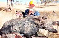 澳大利亚人们头疼不已!野猪泛滥成灾,吃都吃不完