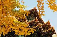 国庆|一起读宫词,欣赏故宫的秋天之美吧!