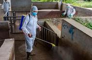农业农村部:甘肃省定西市岷县发生猪瘟疫情 死亡265头