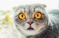 喵精!科学家声称猫咪确实拥有面部表情,但人类难懂它们的意思