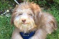 """一只带着迷人微笑的狗狗,它被称之为狗版""""蒙娜丽莎"""",太治愈了"""