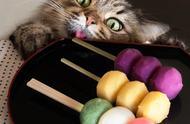 这只猫因贪吃表情走红,绝对是猫界的吃货,嘴馋的样子太可爱了