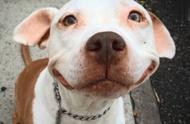 会笑的狗狗往往运气不会差,流浪狗用微笑为自己换来了一个家!