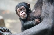 野生动物园又添大熊猫幼崽,其他奶萌的动物宝宝也来啦~
