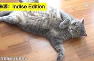 研究发现猫比25年前胖了 或因主人对猫咪过度的宠爱