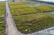 袁隆平现场连线智慧农业国际(青岛)高峰论坛,拟攻关海水稻