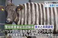 日本人把牛涂成斑马来研究会不会招虫子 结果……