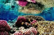 3D打印技术在拯救珊瑚礁上的应用