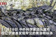一亿年前,蜥蜴生吃小龙虾,一亿年后,人类吃麻辣小龙虾……