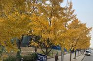 为什么喜欢秋天
