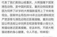 重庆动物园被爆私带游客接触熊猫幼崽 市林业局:情况属实,正督促整改
