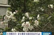 怪了!武大樱花十月开了!网友:这是被天气搞晕了?