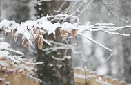 下雪啦?镇平离不远,2019年河南第一场雪来了