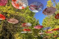 """腾冲银杏村""""黄情""""播报:在最美的秋色里享受生活的浪漫与美丽"""