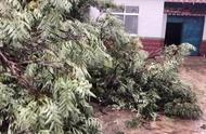 一场暴雨夹冰雹后,一颗树倒在家门口,太吓人