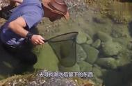 男子赶海途中,发现一只像海胆的奇特,还被哲了一下
