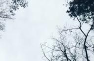 同一地点,同一片天空,同样的树木,不一样的是四季