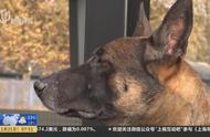 北京市公安局首批警用克隆犬入警,外形完全一样,跟供体高度一致
