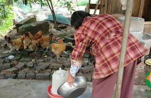 农村婆婆用啥喂小鸡?儿媳说太奢侈了,过期的东西你家咋处理?