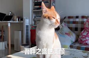 软萌胖为了一条死鱼,和其他猫咪各种争斗,笑到肚儿疼!