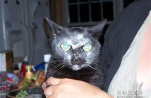 15只让人忍不住笑出来的猫咪 搞笑界里的天才