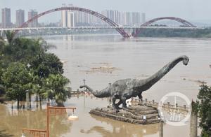 合川洪峰过境 景观绿树都被江水淹没了