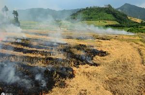 麦收将至,违规烧秸秆或被罚款,农民为啥还要偷偷烧?