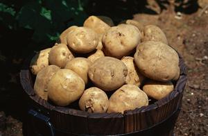 土豆不能和米饭一起吃,土豆也不能和鸡蛋一起吃?