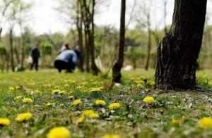 公园挖野菜折射的是城里人的乡愁