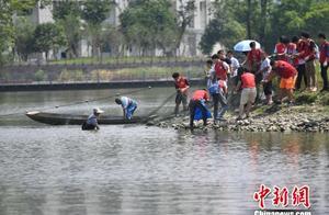 电子科大捕捞上1500余斤大鱼 全校毕业生共享全鱼宴