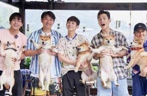 张子枫抱狗姿势为什么上热搜?张子枫抱狗姿势是什么样的?