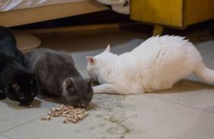楼房养猫问题多,铲屎官为保障猫咪安危,四点准备不可缺