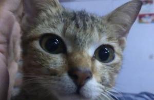 猫咪咬烂主人耳机线被批评,叼回一条小蛇作为补偿。太有爱了!