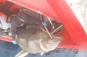 北冰洋的延绳钓业,大鱼泛滥了吧!