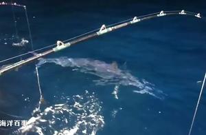 夜晚海面,偶遇大鱼,跟着渔船不肯走了!