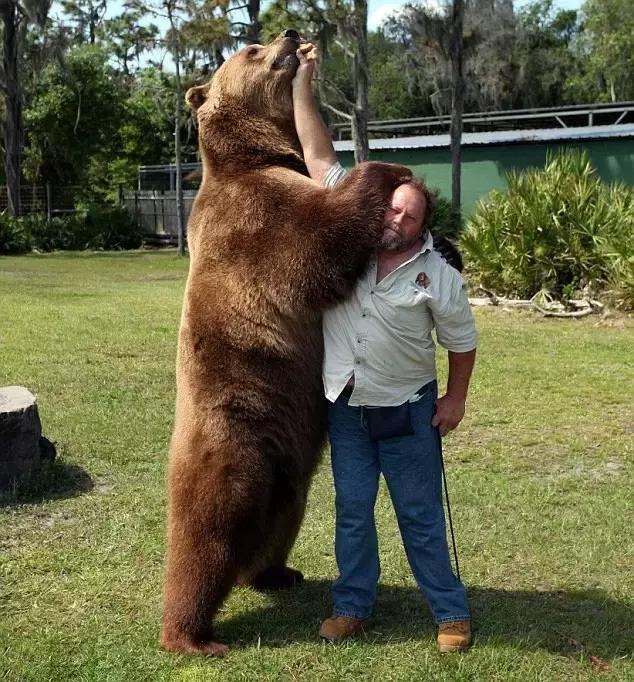 从熊熊说开去,德语中熊是怎样的存在?