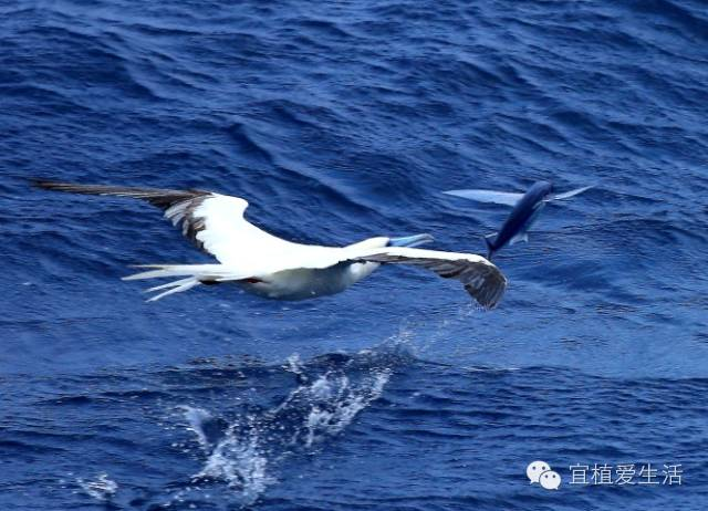 《大鱼海棠》不是神话传说,真的有会飞的鱼耶!