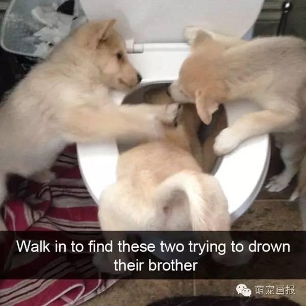 搞笑狗狗一籮筐