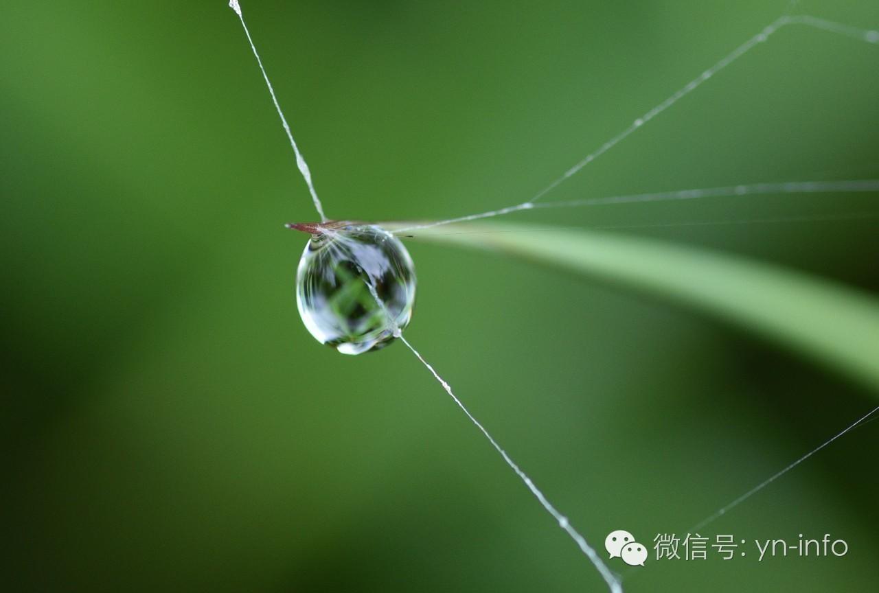 摄影 | 珍珠
