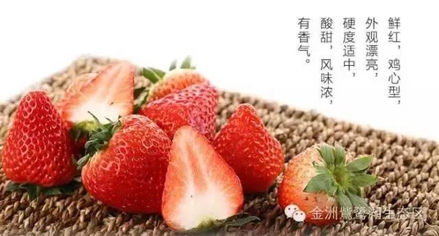 较全草莓苗採摘园功略,速度个人收藏!