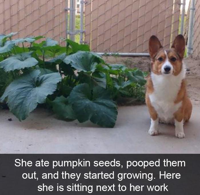 狗狗的搞笑照片和故事 能讓你的心情好很多(15張)