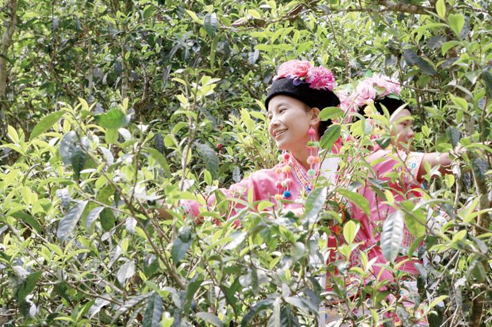 普洱,全面推动中国茶文化遗产走向世界
