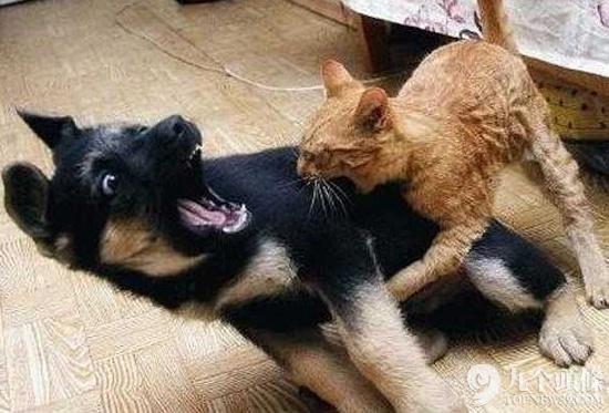 搞笑一刻!动物们居然有这些无比悲催的时刻