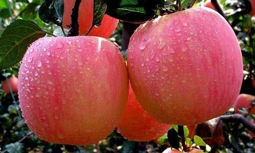 全世界都相信的十大健康水果,不看会后悔哦 食疗养生 第1张