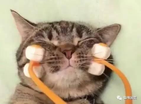 给猫咪用瘦脸神器会有怎样的效果?