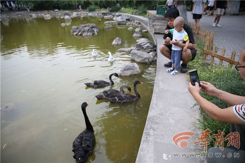 一个多月没见到美院明湖里的黑天鹅了 想着想着她就哭了