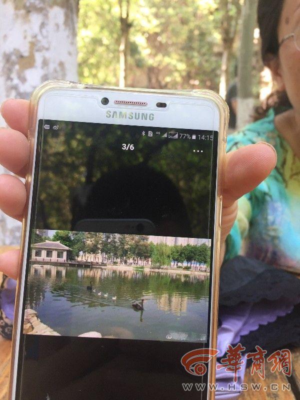 一个多月没见到美院明湖里的黑天鹅 她想着想着都哭了