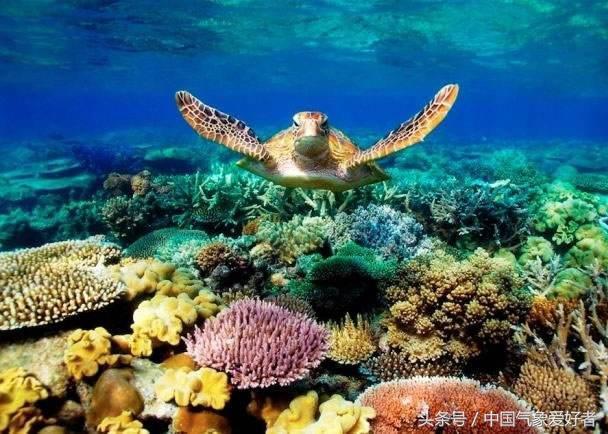 珊瑚大量白化死亡!海洋生态危在旦夕!人类应该怎么办?